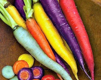 rainbow-carrots-choose-from-red-white-purple-white-full-purple-and-yellow